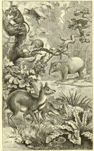 Plate VIII, A Forest in Borneo, with Characteristic Mammalia. From The Geographical Distribution of Animals, 1876.