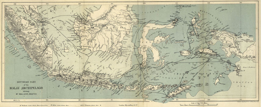 Wallace's travels through the Malay Archipelago. (PD-US) From: Wallace, A.R. The Malay Archipelago.