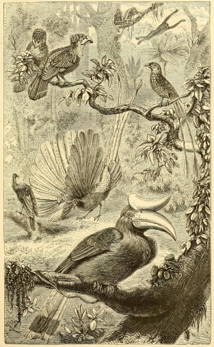 Plate IX, A Malayan Forest with some of its peculiar Birds. From The Geographical Distribution of Animals (1876).