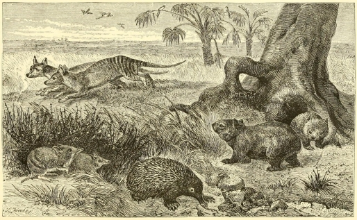 Plate XI, A Scene in Tasmania, with Characteristic Mammalia. From The Geographical Distribution of Animals (1876).