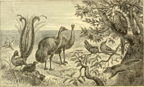 Plate XII. The Plains of New South Wales, with Characteristic Animals. From The Geographical Distribution of Animals (1876).